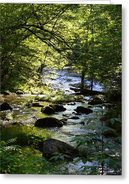 Tennessee River Greeting Cards - Sugarlands Creek Greeting Card by Audrey Priel