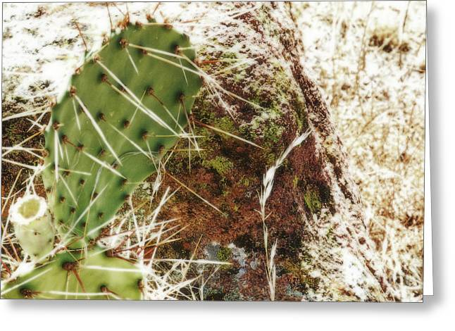 Oklahoma Landscape Greeting Cards - Summer 2011 Greeting Card by Fred Lassmann