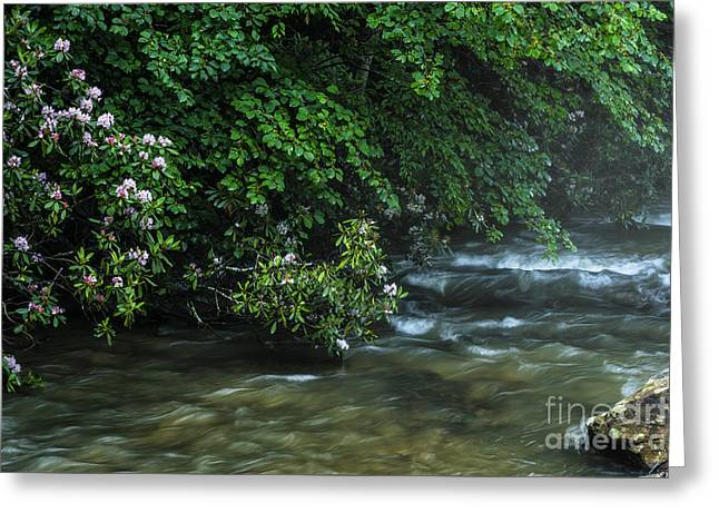Rhododendron Maximum Greeting Cards - Summer along Birch River Greeting Card by Thomas R Fletcher