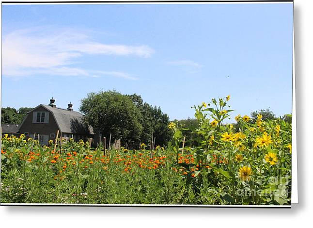 The Houses Greeting Cards - Summer at the Old Queens Farm Greeting Card by  Photographic Art and Design by Dora Sofia Caputo