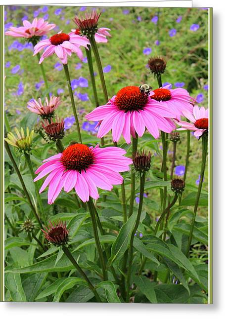 Nature Center Greeting Cards - Summertime  Beauties - Coneflowers Greeting Card by  Photographic Art and Design by Dora Sofia Caputo