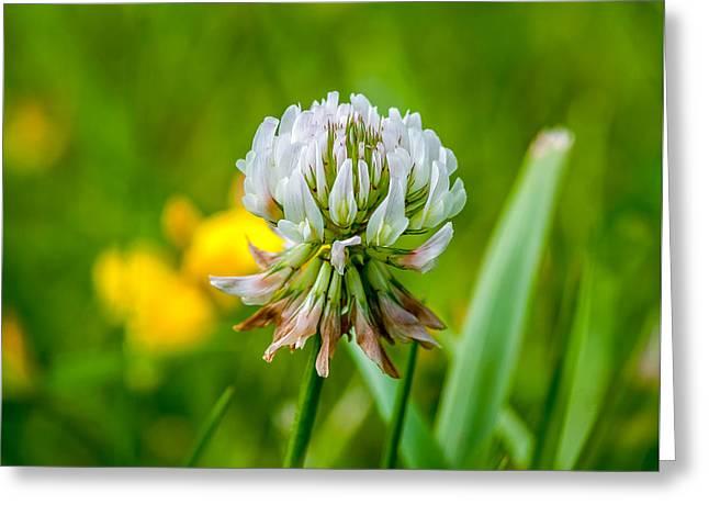 Flower Blossom Greeting Cards - Summer Begins Greeting Card by Steve Harrington