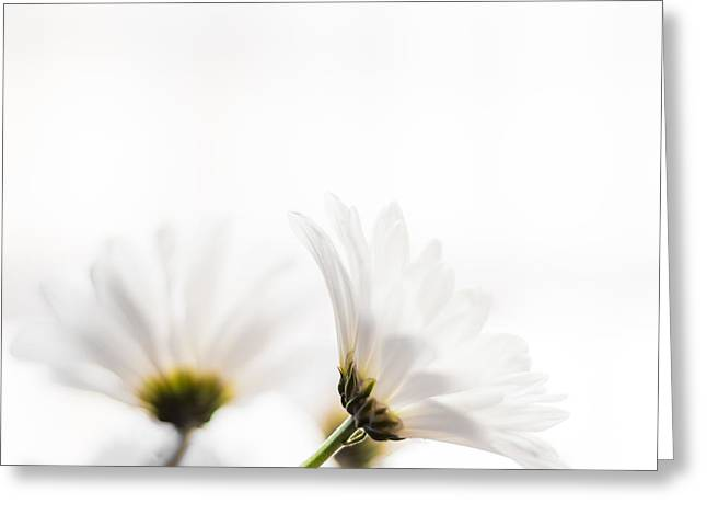 Leaflets Greeting Cards - Summer Bliss Horizontal Greeting Card by Shelby  Young