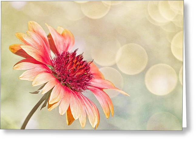 Lindaleesart Greeting Cards - Summer Bliss Greeting Card by Linda Lees