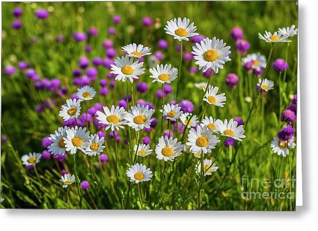 Summer Blooms Greeting Card by Veikko Suikkanen