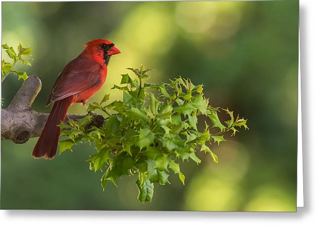 Mascots Greeting Cards - Summer Cardinal New Jersey Greeting Card by Terry DeLuco