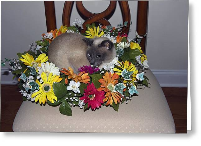 Tonkinese Greeting Cards - Summer Cat Greeting Card by Sally Weigand