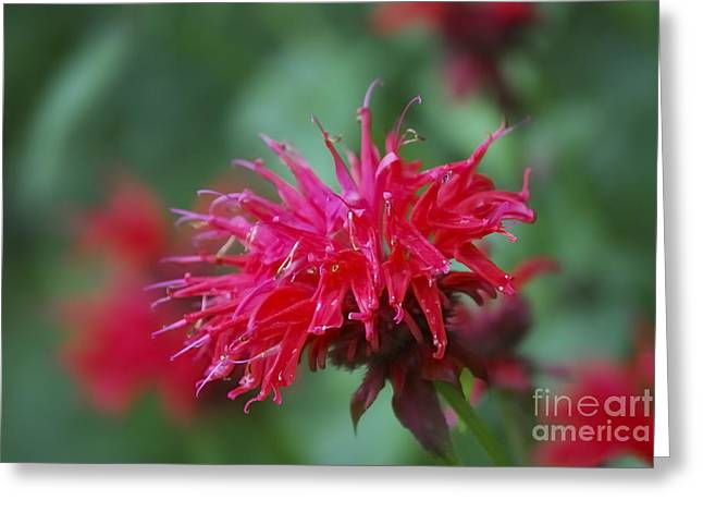 Balm Greeting Cards - Summer Color Greeting Card by Randy Bodkins