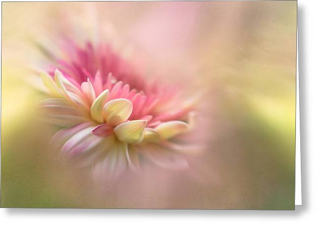 Dreamy Photographs Greeting Cards - Summer Dreaming Greeting Card by Penny Myles