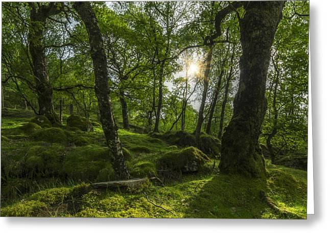 Woodland Scenes Greeting Cards - Summer Evenings In Wales Greeting Card by Ian Mitchell