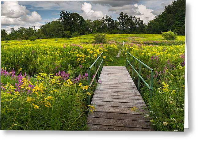 Field. Cloud Greeting Cards - Summer Field of Wildflowers Greeting Card by Bill  Wakeley