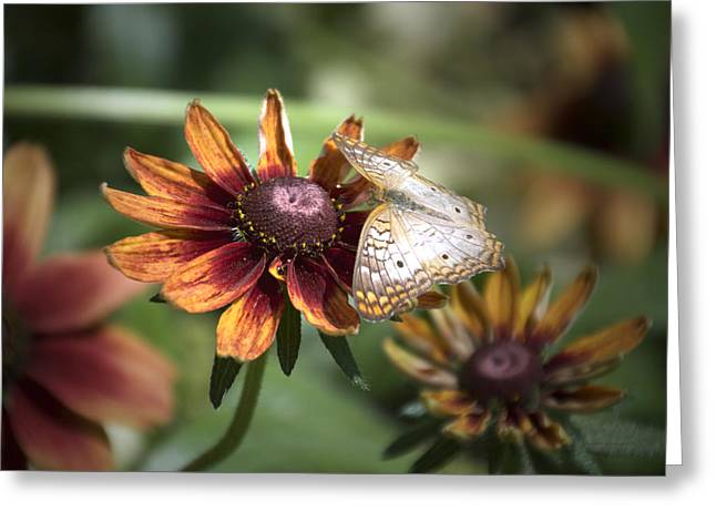 Invertebrates Greeting Cards - Summer Floral With Butterfly 02 Greeting Card by Thomas Woolworth