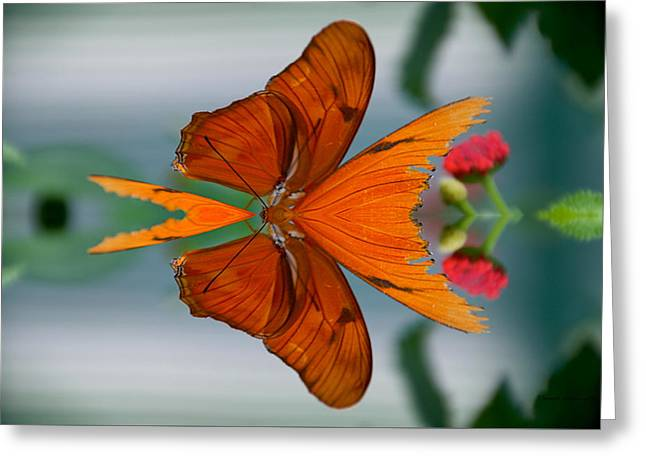 Abstract Digital Mixed Media Greeting Cards - Summer Floral With Butterfly Mirror Image Greeting Card by Thomas Woolworth