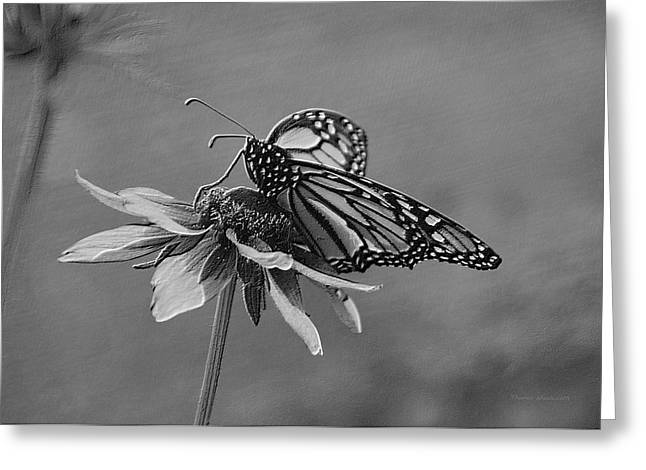 Summer Floral With Monarch Butterfly 04 Bw Greeting Card by Thomas Woolworth