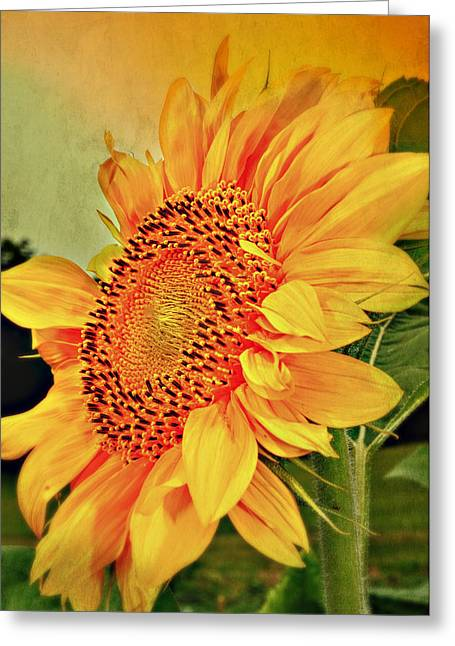 Sunflower Photograph Greeting Cards - Summer Flower Greeting Card by Kathy Jennings