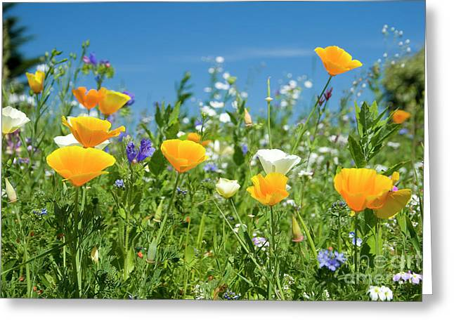 Sophie Greeting Cards - Summer Flowers Greeting Card by Sophie De Roumanie