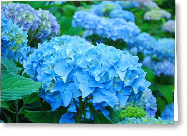 Baslee Troutman Greeting Cards - Summer Garden Blue Hydrangea Flowers art print Baslee Greeting Card by Baslee Troutman