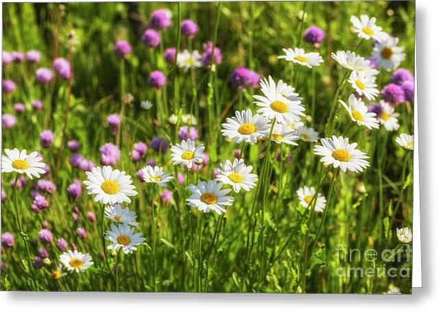 Summer Garden Greeting Card by Veikko Suikkanen