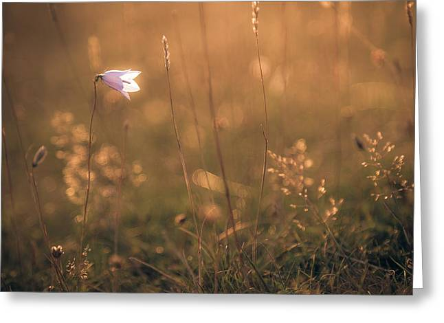 Bokeh Greeting Cards - Summer glow Greeting Card by Chris Fletcher