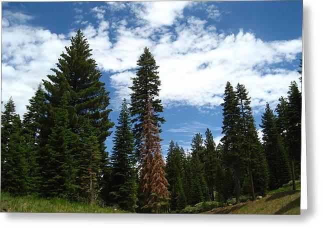 Sheryl Burns Greeting Cards - Summer Hike Greeting Card by Sheryl Burns