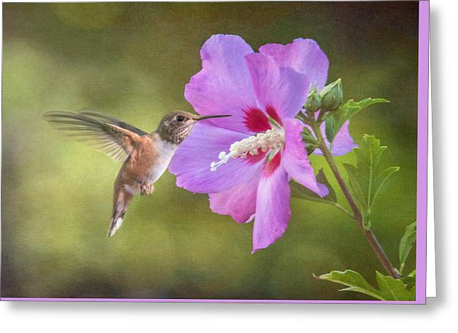 Rose Of Sharon Greeting Cards - Summer Humming Greeting Card by Angie Vogel