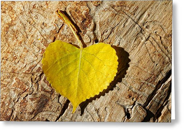 Yellow Leaves Greeting Cards - Summer Love Heart Shaped Leaf Greeting Card by Tracie Kaska
