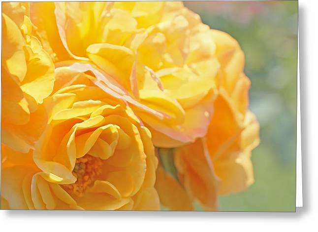 Square Format Greeting Cards - Golden Yellow Roses in the Garden Greeting Card by Jennie Marie Schell