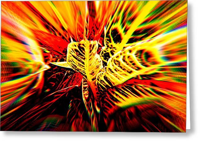 Artist Photographs Greeting Cards - Summer Plant Blur Greeting Card by Jerod Scheiferstein