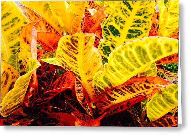 Modern Photographs Greeting Cards - Summer Plant Greeting Card by Jerod Scheiferstein