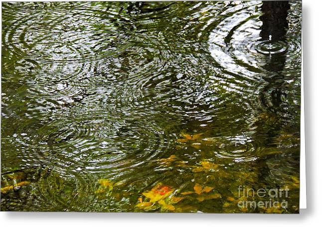 Alga Greeting Cards - Summer Rain Greeting Card by Marilee Noland
