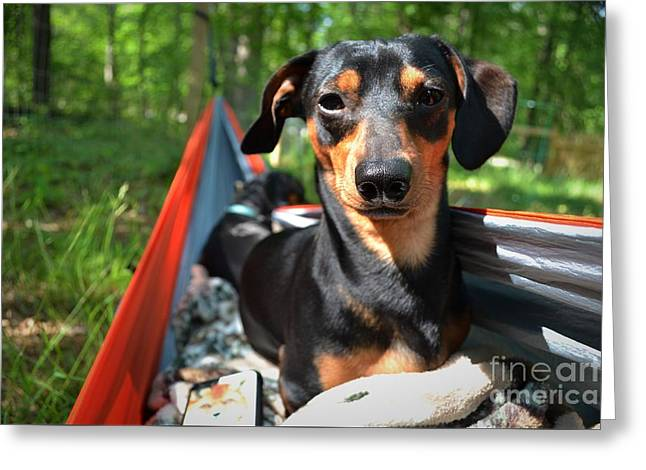 Black And Tan Dachshund Greeting Cards - Summer Relaxation Greeting Card by Ben Blount