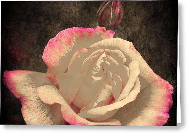 Rose Petals Greeting Cards - Summer Rose 3 v2 Greeting Card by Alex Art