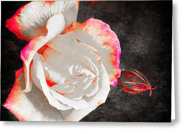 Rose Petals Greeting Cards - Summer Rose 3 v3 Greeting Card by Alex Art