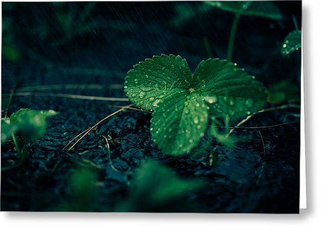 Moist Greeting Cards - Summer Shower Greeting Card by Mikael Kristenson