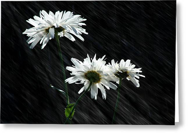 April Showers Greeting Cards - Summer Showers Greeting Card by Barbara  White