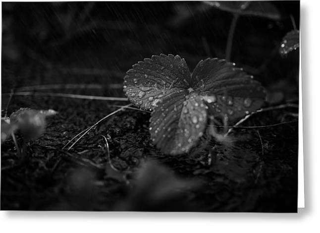 Moist Greeting Cards - Summer Showers Greeting Card by Mikael Kristenson