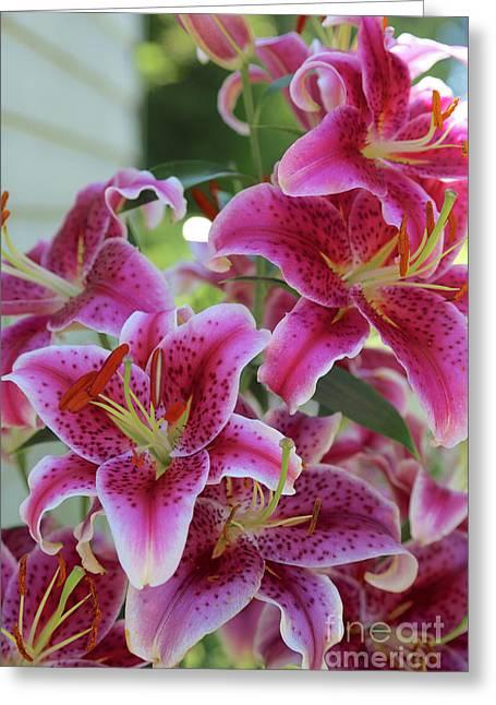 Summer Stargazer Pink Lilies Greeting Card by Carol Groenen