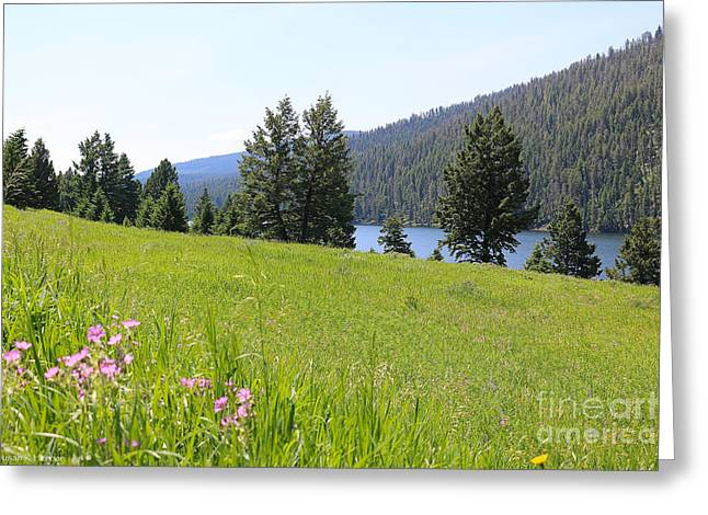 Gallatin River Greeting Cards - Summer Startup Greeting Card by Susan Herber