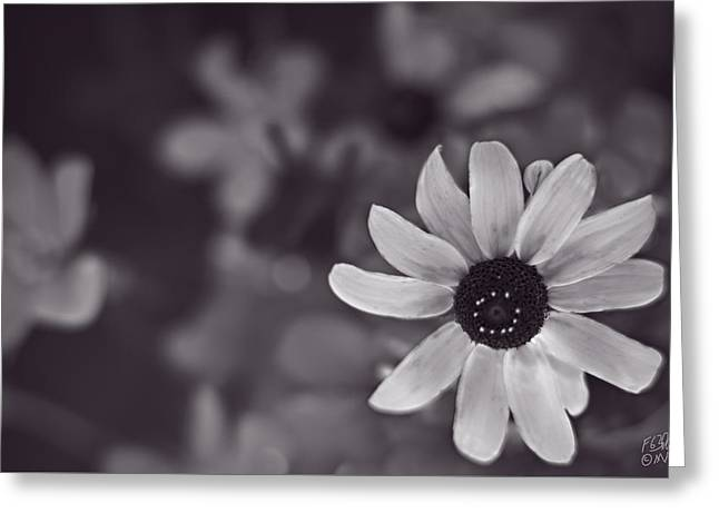 Abstract Style Greeting Cards - Summer Sunshine - Monochrome by fleblanc Greeting Card by F Leblanc