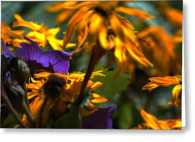 Summer Wanes Greeting Card by Ross Powell