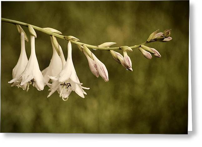 Hostas Greeting Cards - Summertime Moment Greeting Card by Angie Tirado