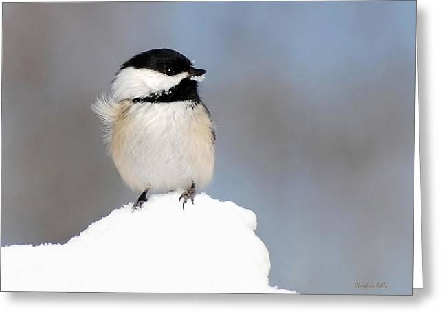 Summit - Black-capped Chickadee Greeting Card by Christina Rollo