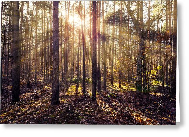 Fall Trees Greeting Cards - Sun beams in the autumn forest Greeting Card by Dmytro Korol