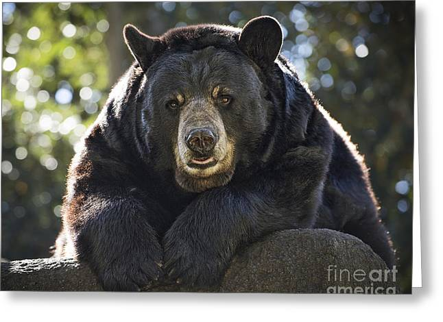 Black Teddy Greeting Cards - Sun Bear Greeting Card by Jamie Pham