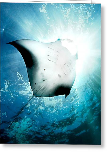 Manta Rays Greeting Cards - Sun Diver Greeting Card by Henry Jager