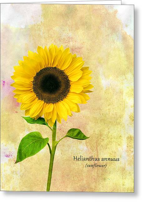 T Shirts Greeting Cards - Sun Flower Greeting Card by Mark Rogan