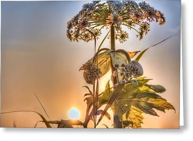 Sunlight On Flowers Digital Greeting Cards - Sun Flower Greeting Card by Nadia Sanowar