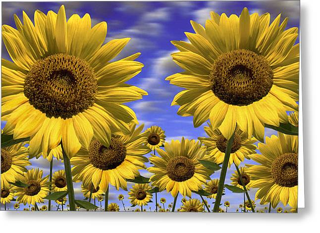 Show Print Greeting Cards - Sun Flowers Greeting Card by Mike McGlothlen