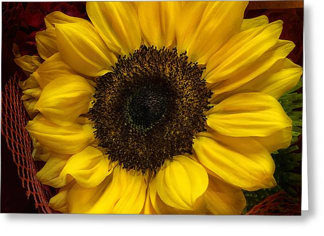Exture Greeting Cards - Sun In The Flower Greeting Card by Arlene Carmel