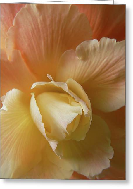 Begonias Greeting Cards - Sun Kissed Begonia Flower Greeting Card by Jennie Marie Schell